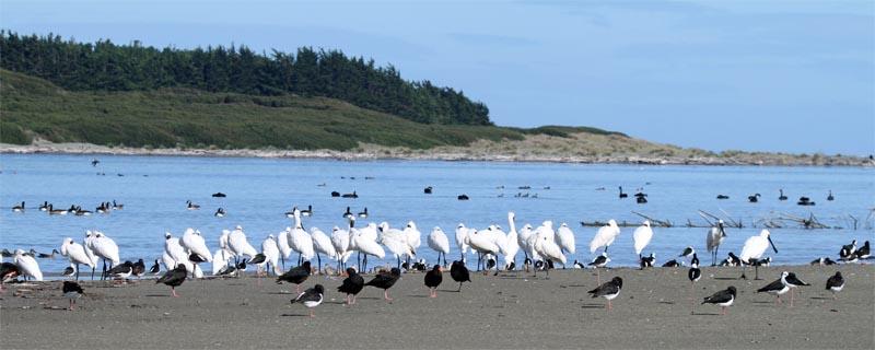 Foxton birds