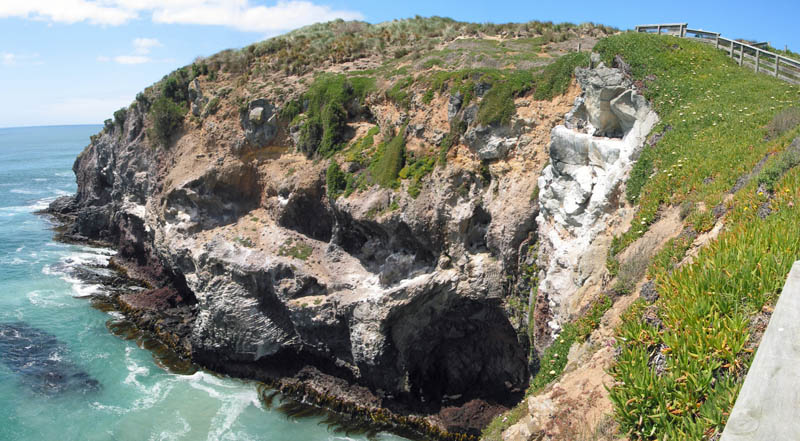 Panorama cliffs at Taiaroa Head