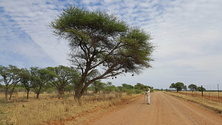 Zaa Road